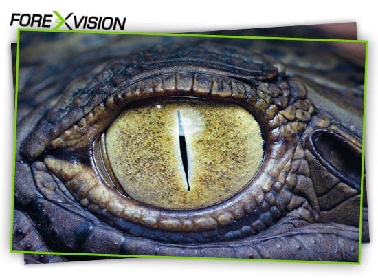 binarnye-optsiony-torgovlya-po-alligatoru